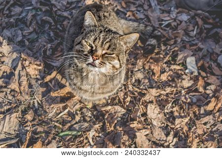 Cute Cat With Yellow Eyes Looking Up To The Camera Sitting On The Old Dry Brown Leaves. Low Contrast