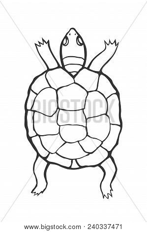 Hand Drawn Tortoise Illustration In Sketch Style The Contour Of Turtle Coloring
