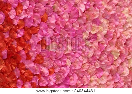 The Dry Pink Petals Floral For Background