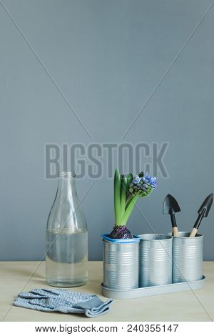 Side View Still Life Of Hyacinth Mix Plant, Gardening Tools, Gloves And Glass Bottle With Water On W