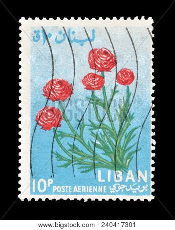 Lebanon - Circa 1964 : Cancelled Postage Stamp Printed By Lebanon, That Shows Ranunculus Flower.