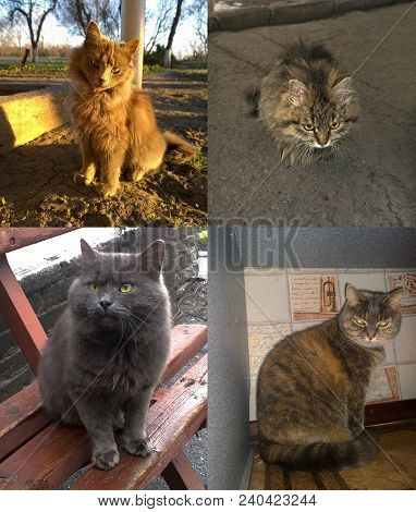 Several Perspectives Of Gray Fluffy Cats - Domestic And Homeless