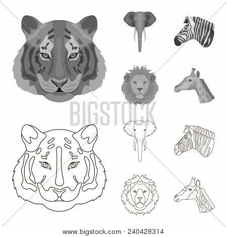Tiger, Lion, Elephant, Zebra, Realistic Animals Set Collection Icons In Outline, Monochrome Style Ve