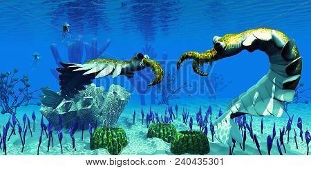 Anomalocaris In Cambrian Seas 3d Illustration - Two Predatory Anomalocaris Invertebrates Have A Disp