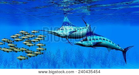 Marlin And Bocaccio Rockfish 3d Illustration - Predatory Blue Marlin Fish Hunt A School Of Bocaccio