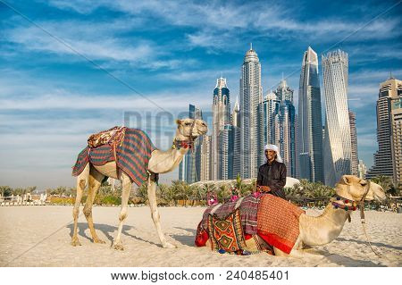 Dubai, Uae - December 26, 2017: Camels On Skyscrapers Background At The Beach . Uae Dubai Marina Jbr
