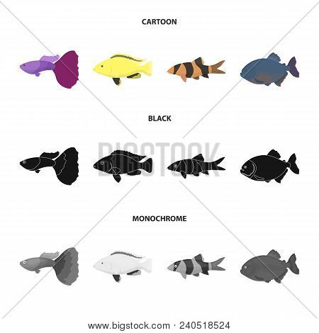 Botia, Clown, Piranha, Cichlid, Hummingbird, Guppy, Fish Set Collection Icons In Cartoon, Black, Mon