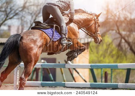 Young girl on bay horse jumping over hurdle in show jumping training poster