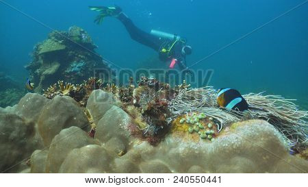 Scuba Diver Explores Underwater Coral Reef And Watching The Fish.scuba Diver Underwater In A Tropica