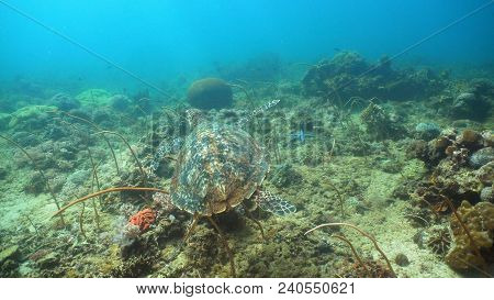 Sea Turtle Between Corals Underwater. Wonderful And Beautiful Underwater World. Diving And Snorkelin