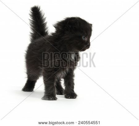 Cute fuzzy black 4-week-old kitten isolated on white background poster
