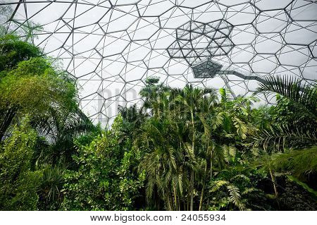 tropical rainforest vegetation inside the eden project biome in cornwall, uk poster