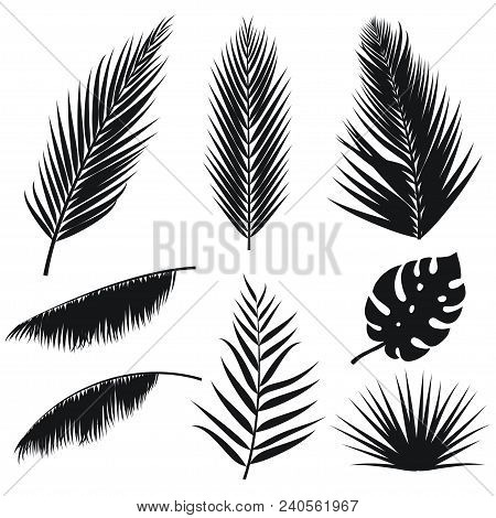 Vector Tropical Palm Leaves Silhouette Set Isolated On White Background. Summer Exotic Flora. Jungle