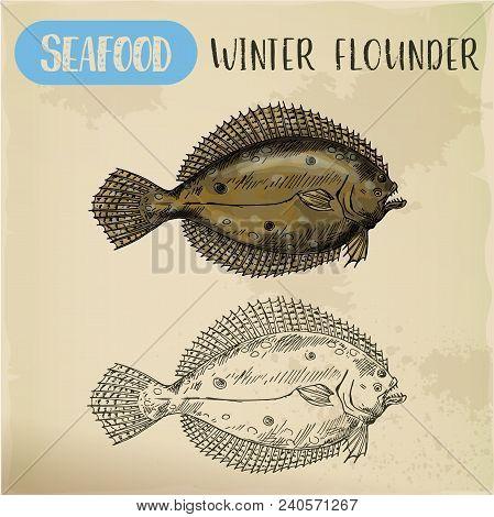 Vector Sketch For Seafood, Side View Of Winter Flounder For Restaurant Signboard Or Market Menu. Han
