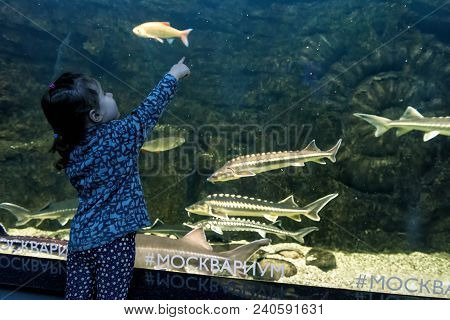 Moscow - April 2, 2018: Baby Looks At The Sea Fish In Aquarium. Little Girl Admires The Aquatic Life