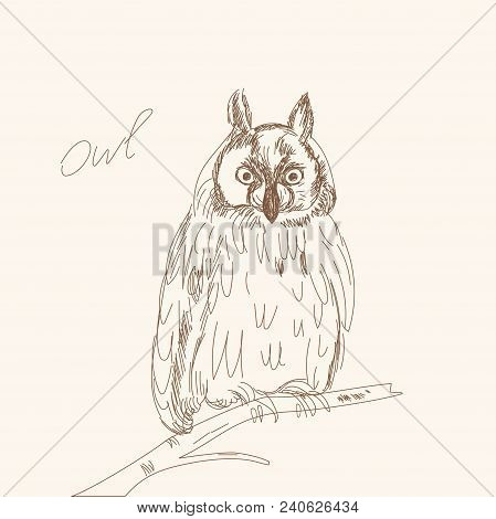 Owl on branch on on beige background. Beautiful mysterious bird. Sketch outline illustration. line art. hand drawn. Vector. Doodle art. poster