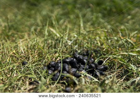 Close Up Black Color Goat Excrement On A Green Grass Ground. Natural Fertilizer. Manure. Agriculture