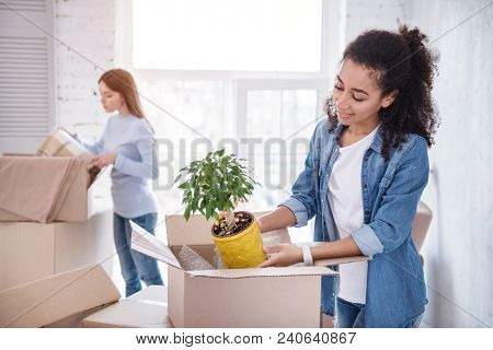 Preparing New Flat. Beautiful Upbeat Girl Unpacking A Plant Out Of The Box While Her Roommate Retrie