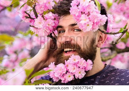 Man With Beard And Mustache On Happy Face Near Tender Pink Flowers, Close Up. Bearded Male Face Peek