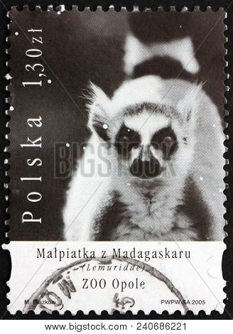 Poland - Circa 2005: A Stamp Printed In The Poland Shows Lemuridae, Zoo Animal, Circa 2005
