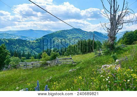 Wild Flowers Meadow With Blue, Yellow And White Flowers, Pastoral View With Mountains In The Backgro