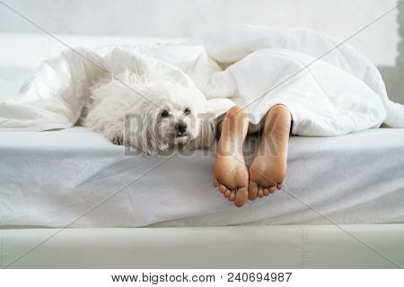 Black Girl In Bed In The Morning With White Dog. Tired Young African American Woman Sleeping At Home