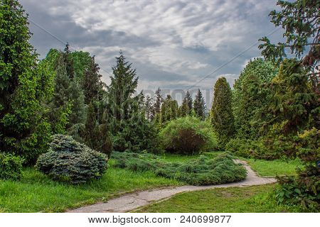 Landscaped Park Of Coniferous Trees. Fairy Forest