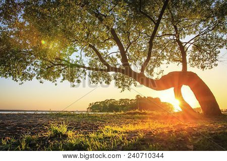 Warm Sunlight With Rays Through Trunk Of Green Tree On River Bank Covered Of Grass Glowing On Sun. S