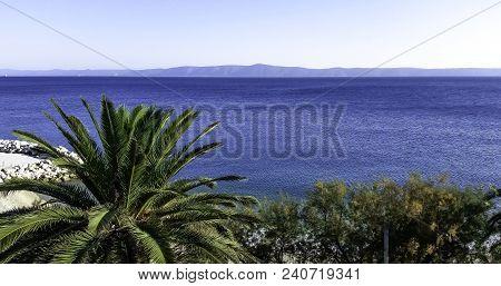 Palm And Adriatic Sea - Podgora, Makarska Riviera, Dalmatia, Croatia