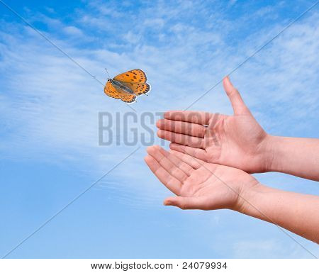 Butterfly Flying From Hand
