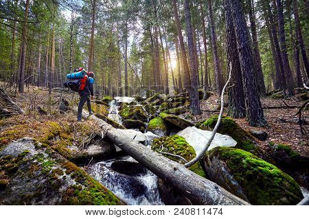 Tourist With Backpack In The Forest