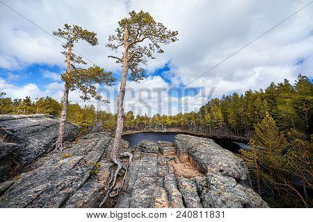 Beautiful Pine Tree At Mountain Lake