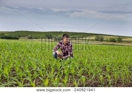 Farmer With Tablet In Corn Field In Spring