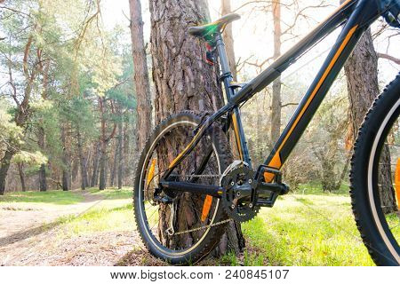 Mountain Bike on the Summer Trail in the Beautiful Pine Forest Lit by the Sun. Adventure and Cycling Concept.
