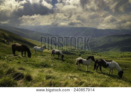 Nature Landscape With Wild Horses. Wild Horses In Nature Landscape. Mountain Horses In Nature Ambien