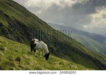 Mountain Horse In Nature Landscape. Horse In Nature Landscape. Mountain Horse In Nature Ambient On A