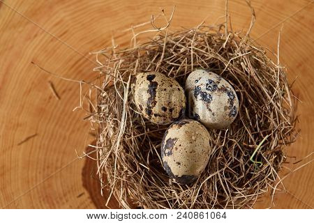 Conceptual Still-life With Fresh Raw Spotted Quail Eggs In Hay Nest On A Round Log, Close Up, Select