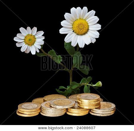 Flowers Growing From Coins