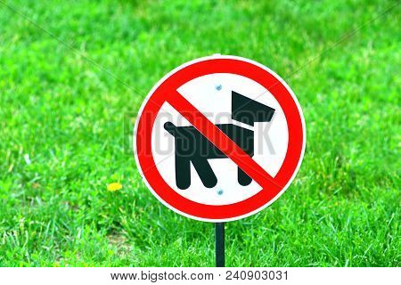 The Sign Of Dog Walking Is Forbidden. A Place Where Dogs Are Forbidden To Go.