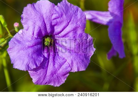 Morning Nectar: A Bee Exiting A Purple Flower