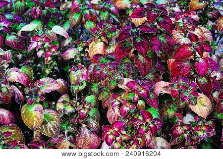 Patterns Of Life: Macro Of Red And Green Plants At Birmingham Botanical Gardens, Birmingham, Alabama