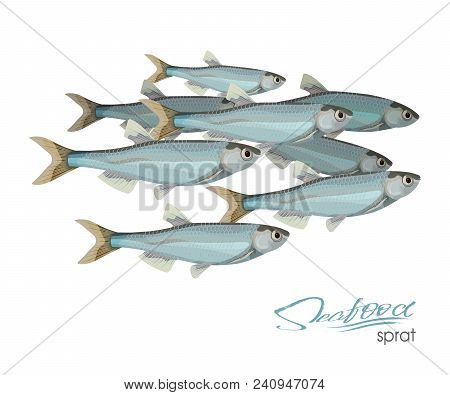 Sprat Sketch Vector Fish Icon. Isolated Marine Atlantic Ocean Sprats. Isolated Symbol For Seafood Re