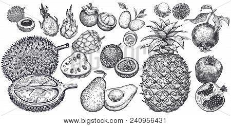 Isolated Exotic Fruits. Pineapple; Avocado; Pomegranate; Lychee; Durian; Passion Fruit; Kumquat; Che