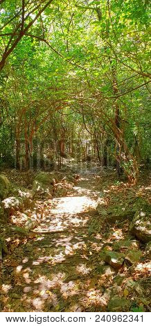 Travel Thailand - Soft Focus With Road In The Woods In Khao Nang Phanthurat Forest Park At Cha Am. R