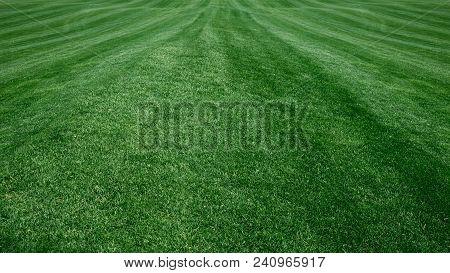 Full Frame Golf Course, Green Grass. Grass Background Golf Courses Green Lawn
