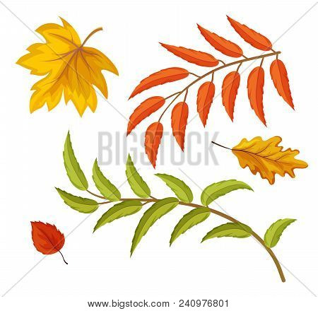 Sketch Maple Oak Aspen And Rowan Tree Dry And Green Leaves Set. Hand Drawn Autumn Forest, Fall Symbo