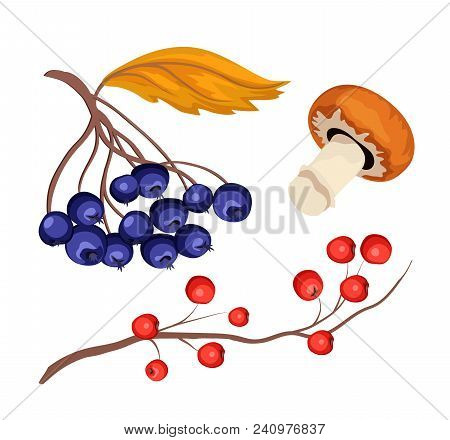 Sketch Rowanberry And Blueberry Bushes On Branch With Green And Orange Leaves And Mushroom. Autumn A