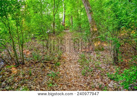 A Landscape View Straight Down A Leafy Hiking Trail In The Forest.