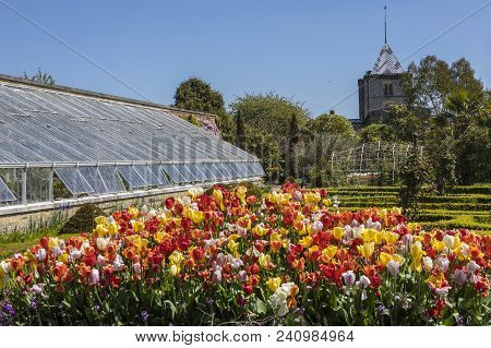 Arundel, Uk - May 5th 2018: A View Of The Beautiful Tulips In One Of The Gardens At Arundel Castle I