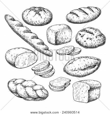 Bread Vector Drawing. Bakery Product Sketch. Vintage Food Illustration For Shop, Bread House Label,